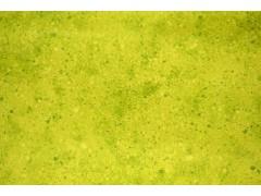 Tela verde pistacho